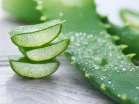 Aloe vera in der Gesichtspflege: Wirkung und Anwendung
